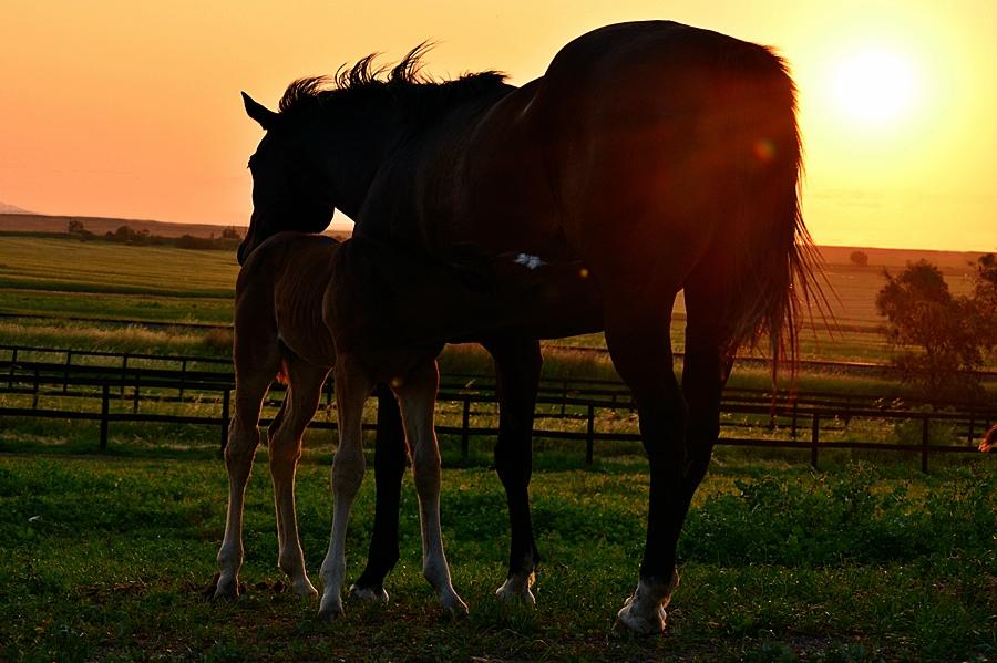 Mare & Foal Care