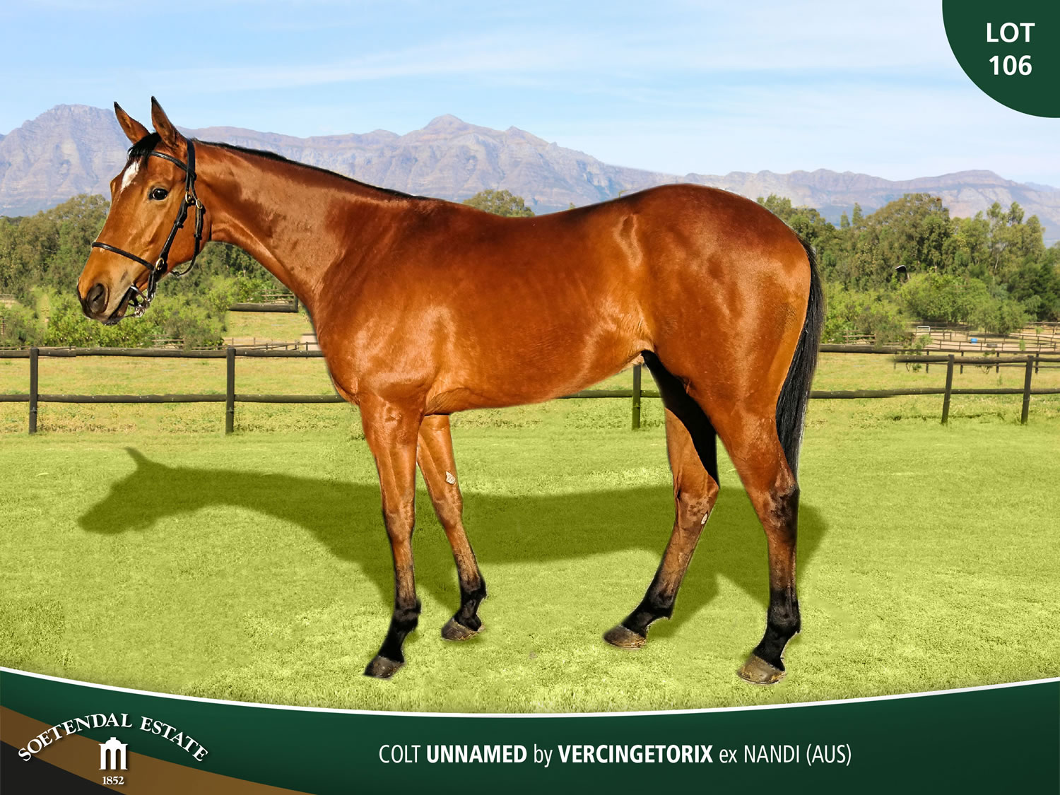 Lot-106-Colt-Unnamed-by-Vercingetorix-ex-Nandi-AUS