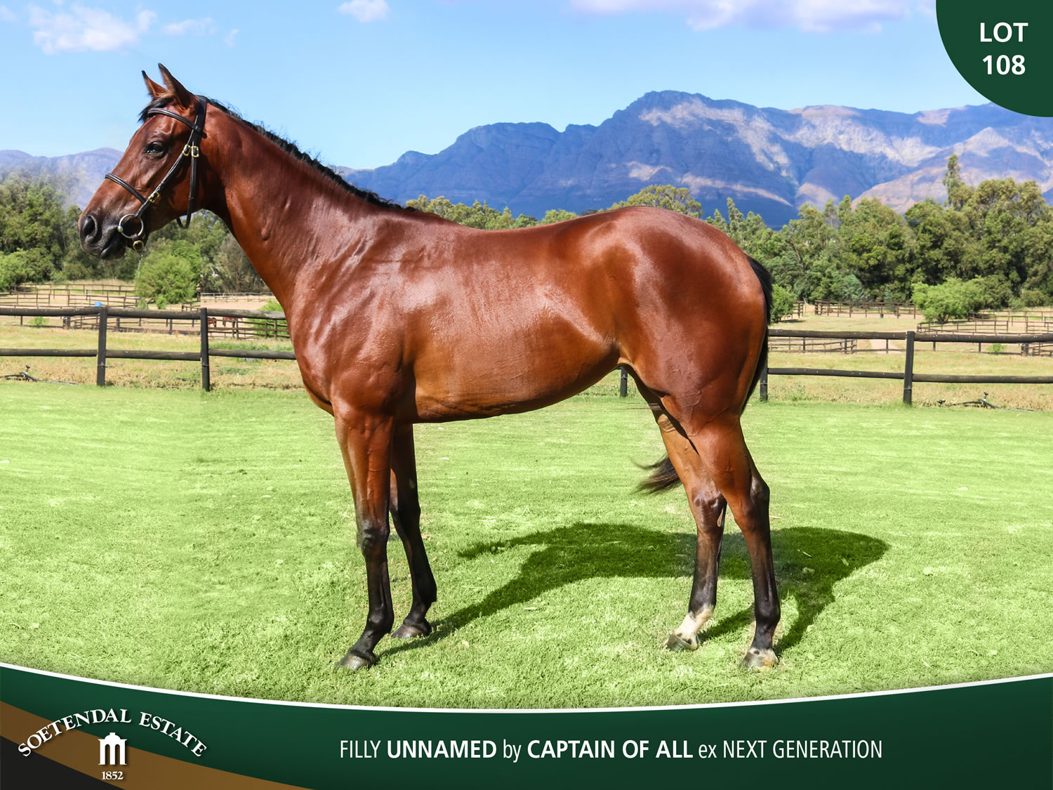 Lot-108-Filly-Unnamed-by-Captain-of-All-ex-Next-Generation
