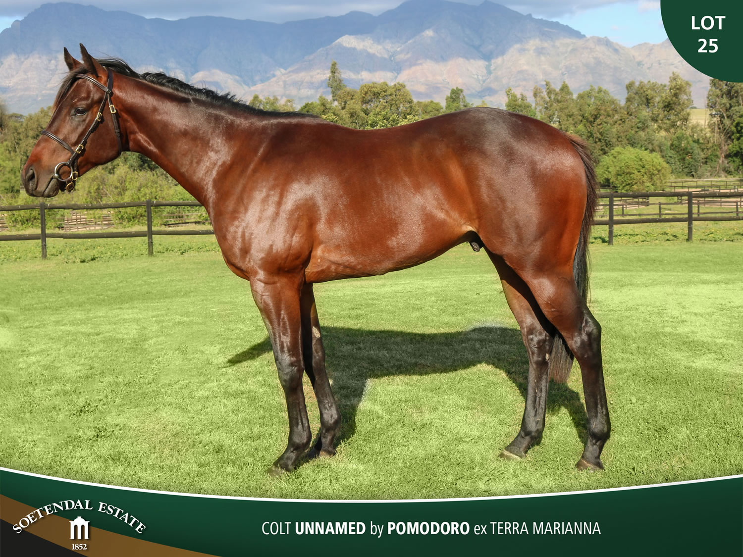 Lot-25-Unnamed-by-Pomodoro-ex-Terra-Marianna