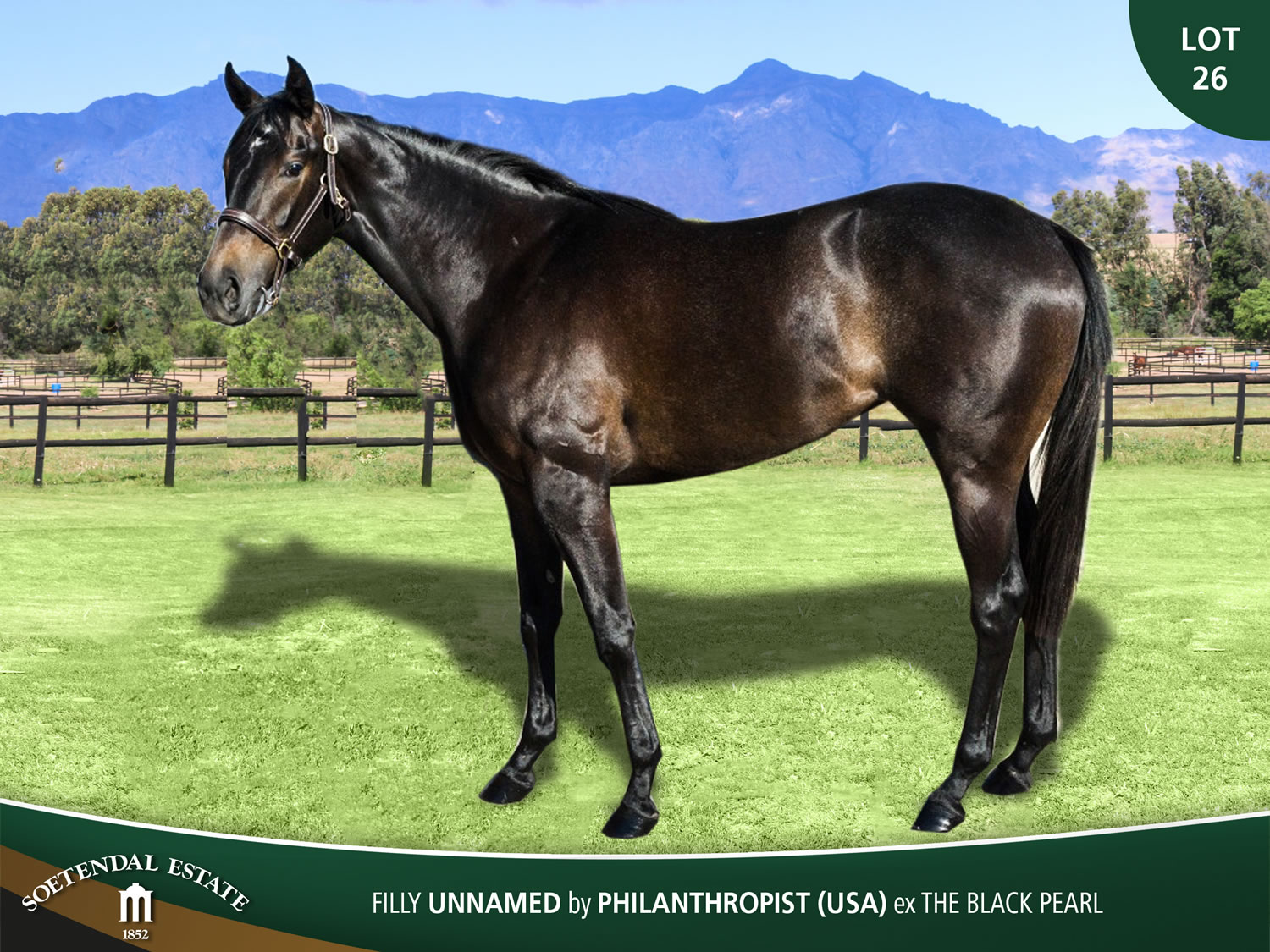 Lot-26-Filly-Unnamed-by-Philanthropist-USA-ex-The-Black-Pearl