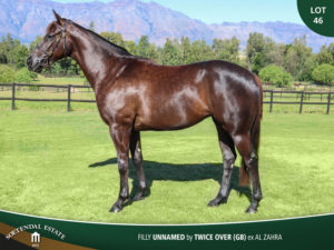Lot-46-Unnamed-by-Twice-Over-ex-Al-Zahra