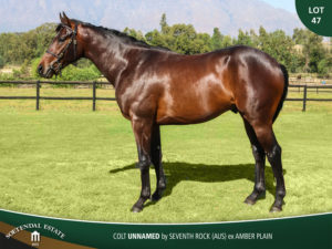 Lot-47-Colt-Unnamed-by-Seventh-RockAUS-ex-Amber-Plain