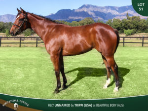 Lot-51-Filly-Unnamed-by-Trippi-USA-ex-Beautiful-Body-AUS