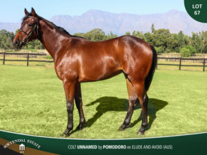 Lot-67-Colt-Unnamed-by-Pomodoro-ex-Elude-and-Avoid-AUS-sale-pic