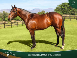 Lot-11-Colt-Unnamed-by-Captain-of-All-ex-Scorched