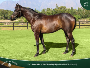 Lot-115-Colt-Unnamed-by-Twice-Over-GB-ex-Prayers-for-Rain-(IRE)