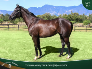 Lot-117-Colt-Unnamed-by-Twice-Over-GB-ex-Pulsator