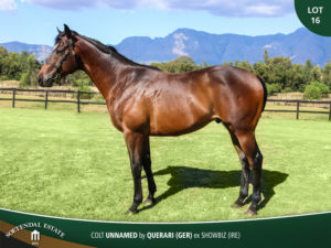 Lot-16-Colt-Unnamed-by-Querari-GER-ex-Showbiz-IRE